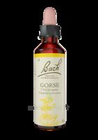 Fleurs de Bach® Original Gorse - 20 ml à SEYNOD